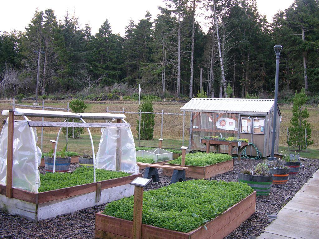 vegetable garden plans for beginners